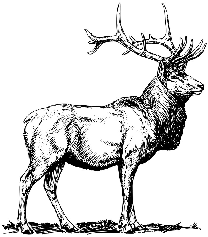 deer fighting coloring pages collections