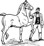 Muž a kůň